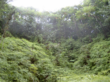 a cloud forest ampitheatre