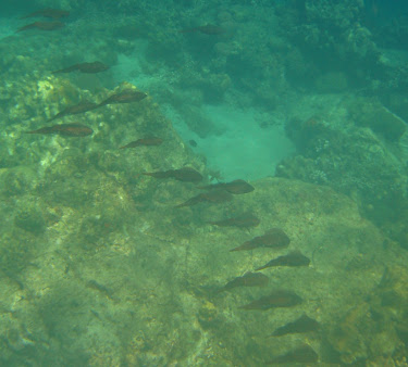 snorkeling between thepitons